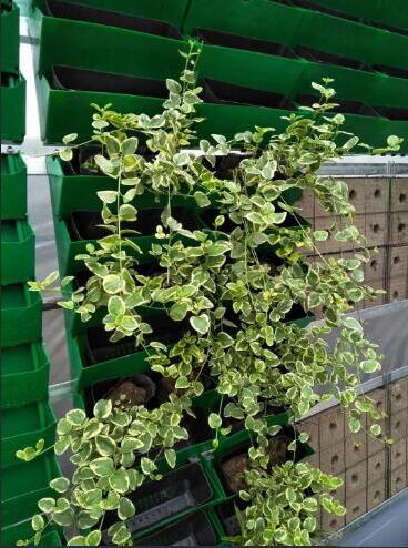 立体绿化植物代理商_价格合理的立体绿化植物当选盛凯园林绿化有限公司