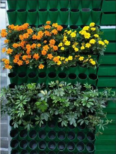 立体绿化植物专卖店-长沙实惠的立体绿化植物哪有卖