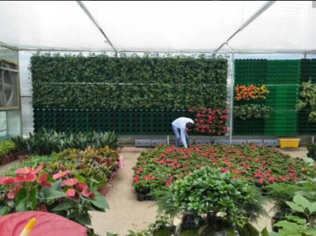 价格合理的立体绿化植物当选盛凯园林绿化有限公司——立体绿化植物哪家有