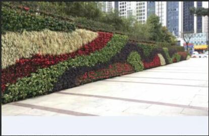 价格优惠的立体绿化植物长沙哪里有 海南立体绿化植物
