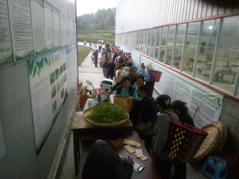 黔南布依族苗族自治州口碑好的都匀红茶叶厂家_红茶市场价格