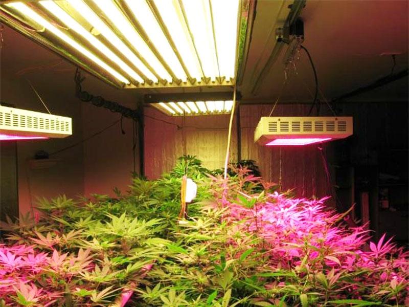 张家口植物生长灯多少钱 价格适中的植物生长灯品牌推荐