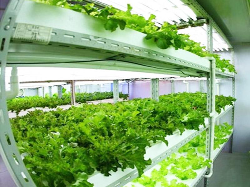 石家庄专业的植物生长灯厂家推荐-呼伦贝尔植物生长灯多少钱