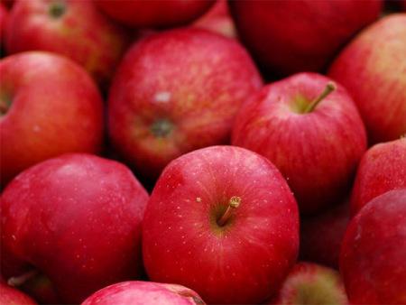 水果配送哪家好,优质的沈阳水果配送就来金福隆