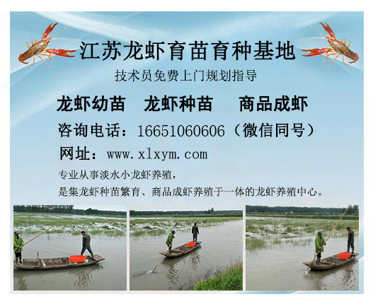 龙虾种苗养殖基地新资讯_上海龙虾养殖场