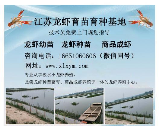 南通龙虾种苗养殖场-宿迁专业的龙虾种苗养殖基地