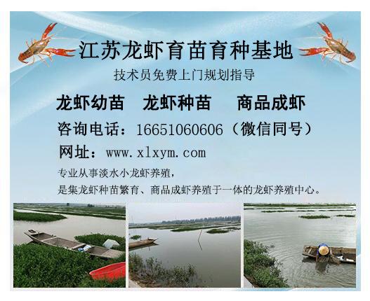 龙虾种苗养殖基地-您的品质之选_山西龙虾种苗养殖基地