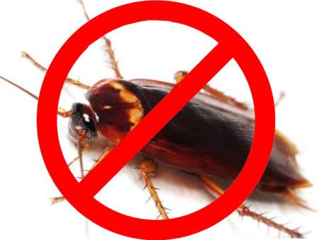 哪里有不错的临沂灭蟑螂服务-临沂灭蟑螂热线电话