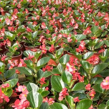花卉选哪家_西安价格实惠的花卉哪家有