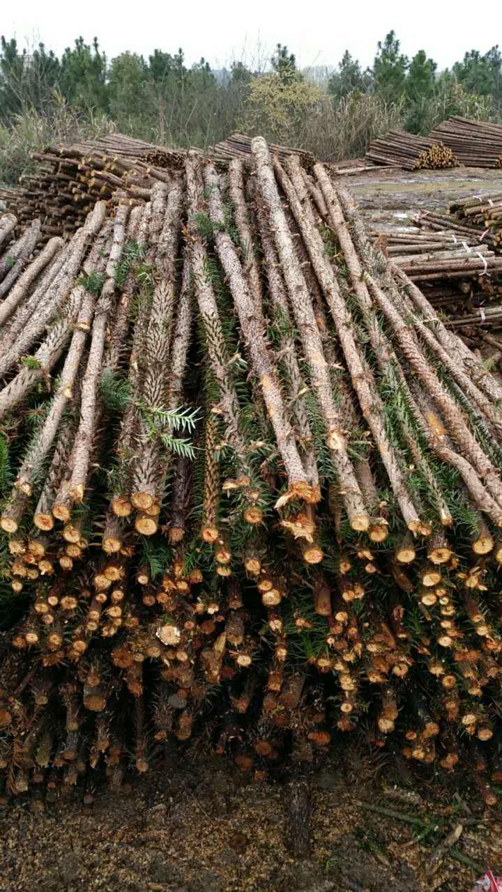 湖北绿化杉木桩推荐_厂家直销的杉木杆