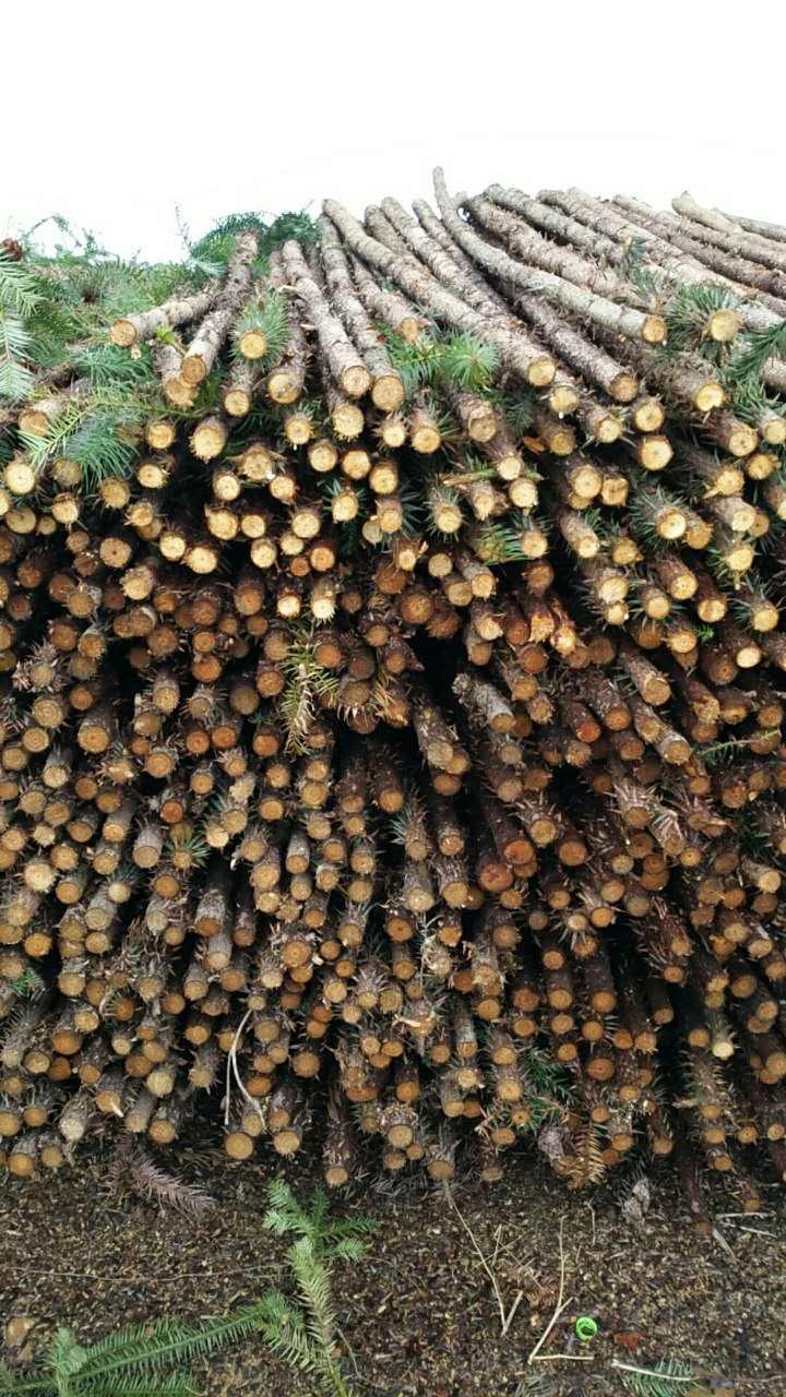 绿化杉木桩找志勇竹木经营部 天然的杉木杆