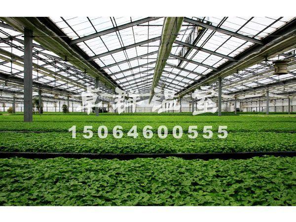安安金纯:山东葡萄温室大棚建设+优质农业大棚设施@卓群