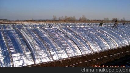 上海市有信誉度的镀铝膜厂家_宁波镀铝膜批发