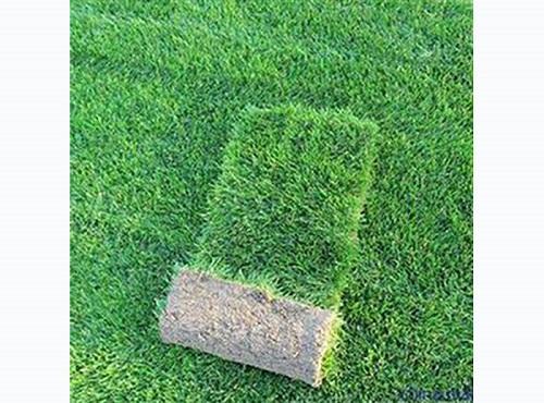 草坪种植基地 哪有优质河南草坪厂家