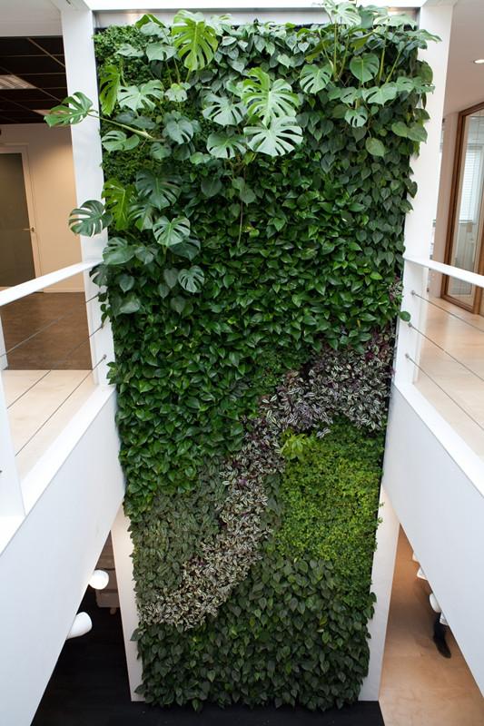 植物墙好不好 值得信赖植物墙设计与安装上哪找
