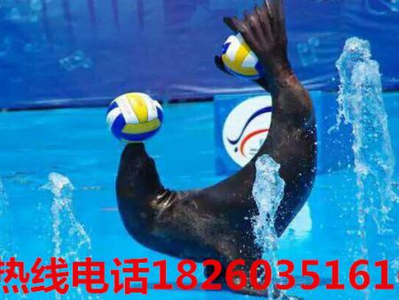 徐州声誉好的海狮表演服务 一级的海狮表演