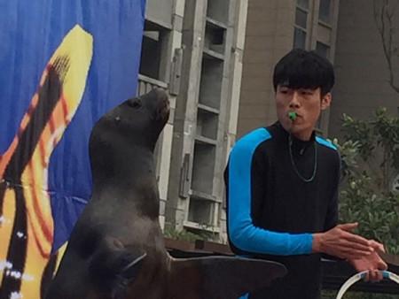 徐州海狮表演价格_价格划算的海狮表演