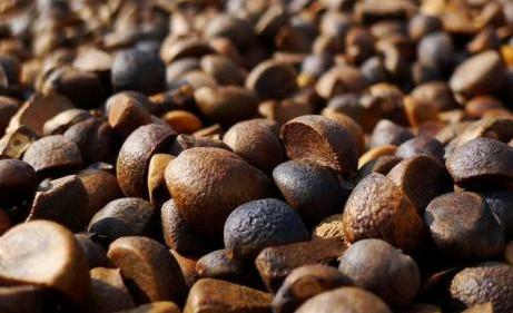 優良的野生山茶油供銷-創新的野生山茶油