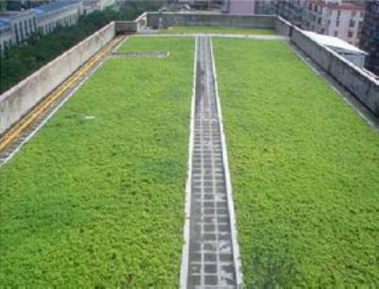 实惠好用的新疆排水板批售_乌鲁?#37202;雋dpe排水板