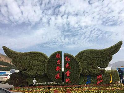 五色草造型价位-徐州物超所值的五色草供应