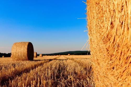 內蒙古口碑好的圓捆機|通化捆草機