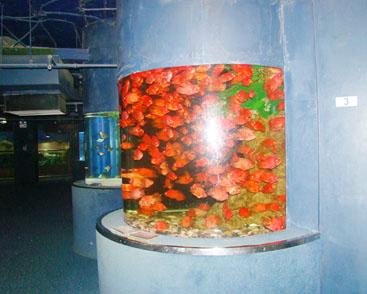 上海酒店观赏鱼缸定制-酒店亚克力鱼缸建设找哪家