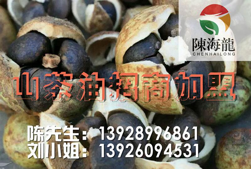 来湖南陈海龙生态农业,买实惠的陈海龙野山茶油-山茶油价格