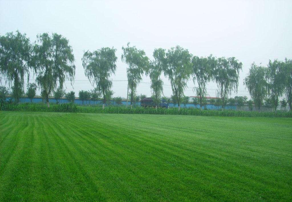 供应辽宁销量好的人造草坪 吉林人造草坪价格