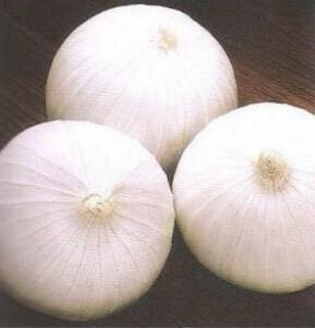 优质的洋葱种子_西昌科威洋葱白皮洋葱种子品质好