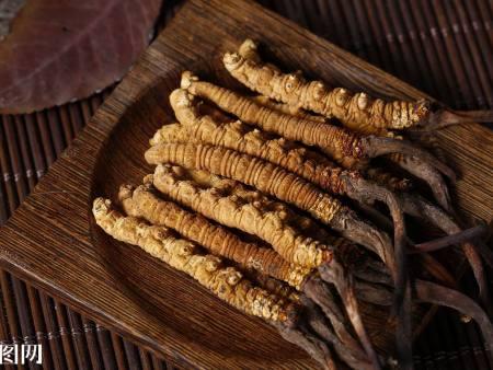 吃冬虫夏草居然有这么多好处你知道吗?