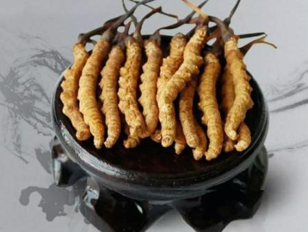 你猜冬虫夏草是动物还是植物呢?