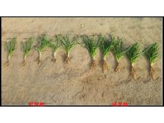 em菌种植种植专用
