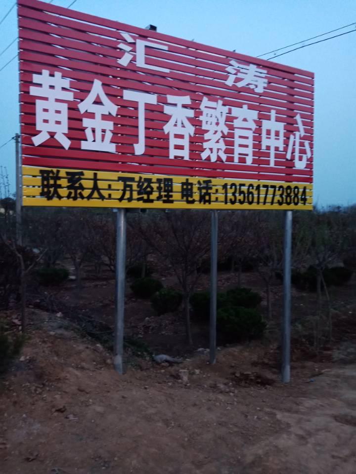 丁香树-找汇涛苗木基地
