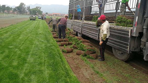 鞍山草坪|供应辽宁有品质的草坪