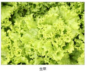 安全的蔬菜批发 东莞合格的工厂配?#22836;?#21153;推荐