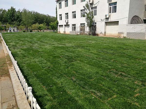 遼寧綠化草坪-優良的草坪推薦