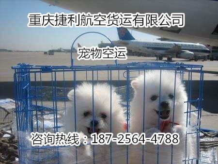重庆宠物空运