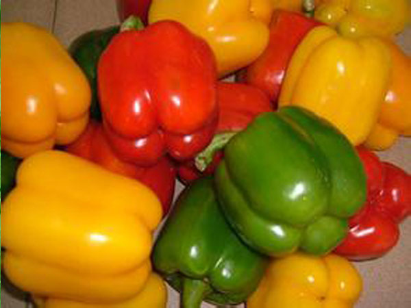 扬州市绿林蔬菜合作社-可靠的葱蒜类蔬菜供应厂家-订购叶菜类蔬菜