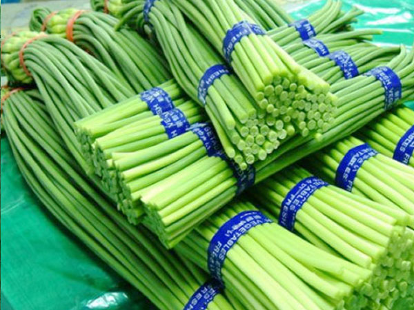 价格划算的葱蒜类蔬菜供销-叶菜类蔬菜代理加盟