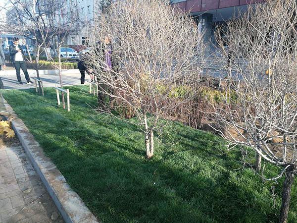 厂家直销的铁岭苗木-病虫害低的绿化苗木出售