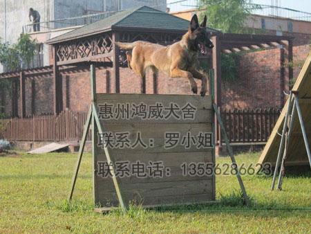 广东训犬,广东训犬基地,广东宠物狗训练|行业资讯-惠州市惠城区鸿威犬舍