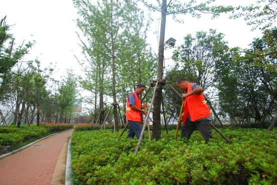 服务周到的园林绿化-哪儿有专业的园林绿化