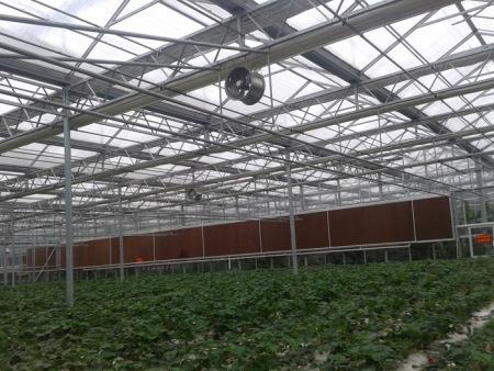蔬菜温室大棚承建