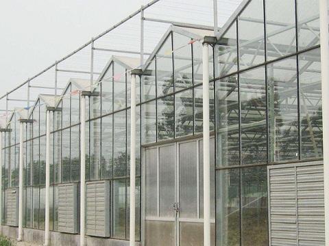 纹络式玻璃温室大棚,纹络式玻璃温室大棚设计,纹络式玻璃温室大棚哪家好