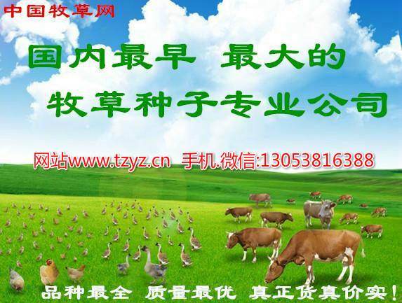 养兔适合种那些牧草 养兔建议黑麦草 健宝 紫花苜蓿等