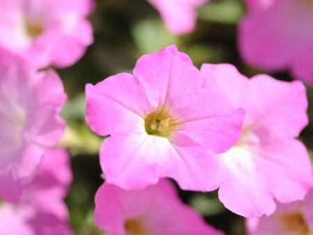 兰州盆栽批发-甘肃大恒园林景观价格实惠的盆栽供应