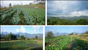 营养保健加盟找芳拓生物科技,上海酵素代理
