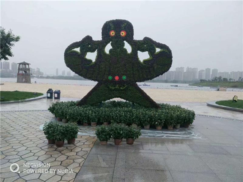 河南五色草廠家-優育的立體花壇出售