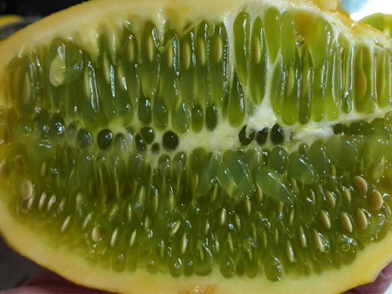 火星果种子厂家_采购火星果就找齐乐果蔬