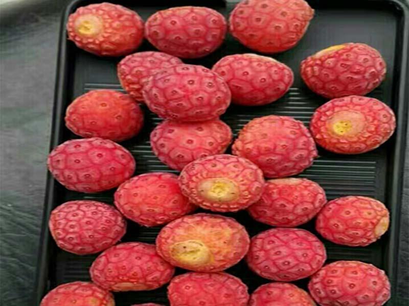 广州石枣招商-采购品质好的石枣就找齐乐果蔬